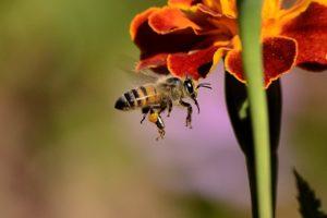 Significado de sonhar com abelha