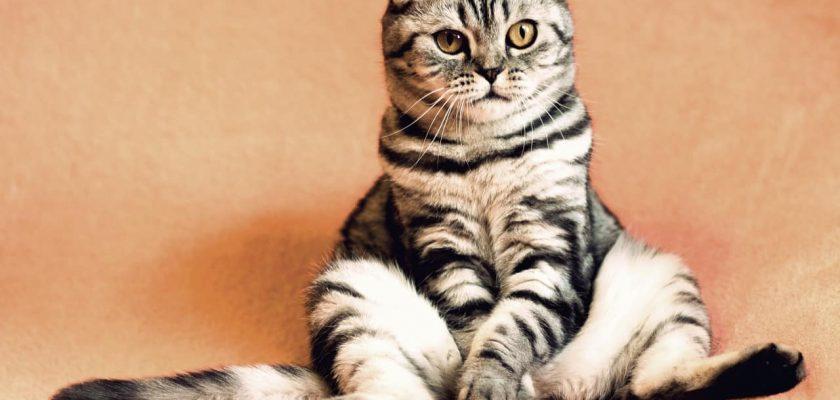 Sonhar com gato significado