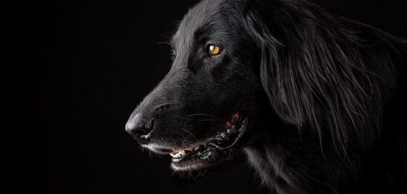 Significado de sonhar com cachorro preto