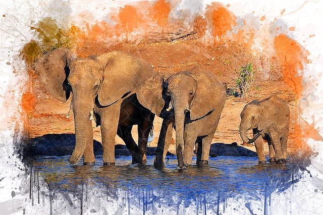 sonhar com elefante