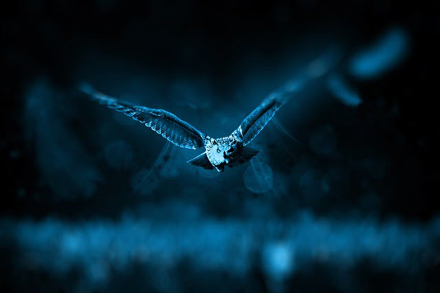 significado de sonhar com coruja