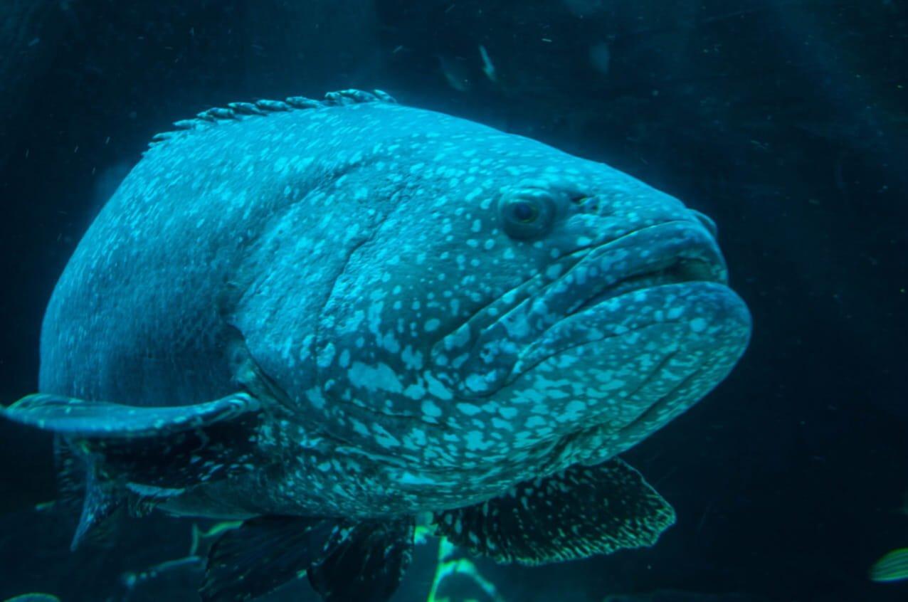 O que significa sonhar com peixe grande