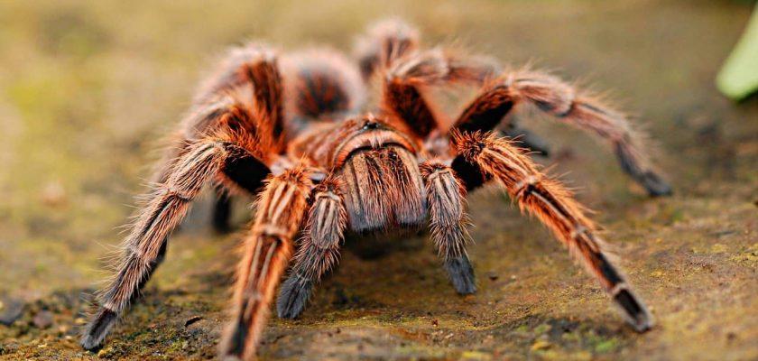 O que significa Sonhar com aranha picando