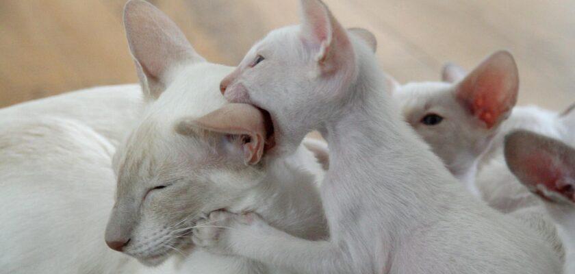 Sonhar com gato branco mordendo