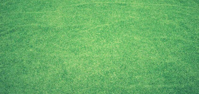 Sonhar com cor verde