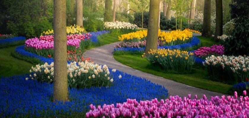 Sonhar com Jardim significado